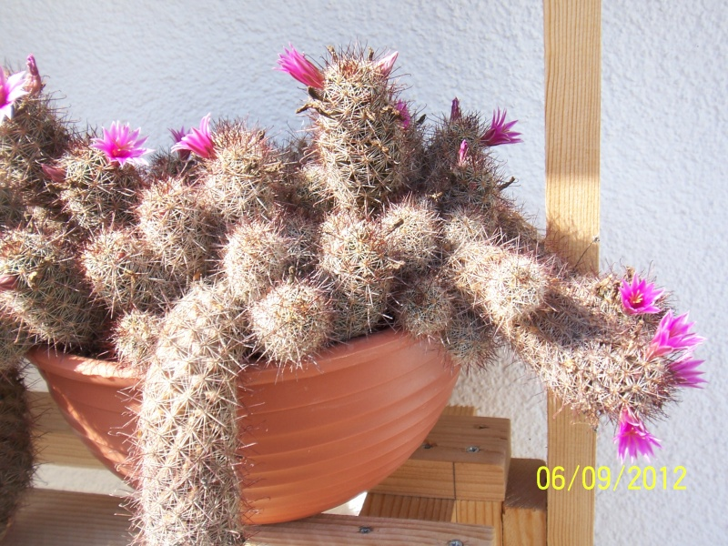 Cacti and Sukkulent in Köln, every day new flowers in the greenhouse Part 34 Bild_281
