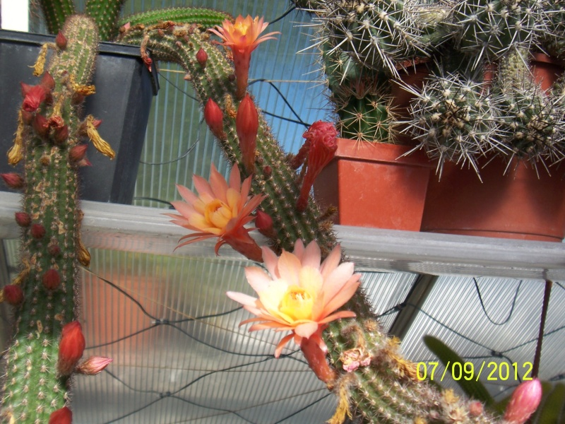 Cacti and Sukkulent in Köln, every day new flowers in the greenhouse Part 34 Bild_309