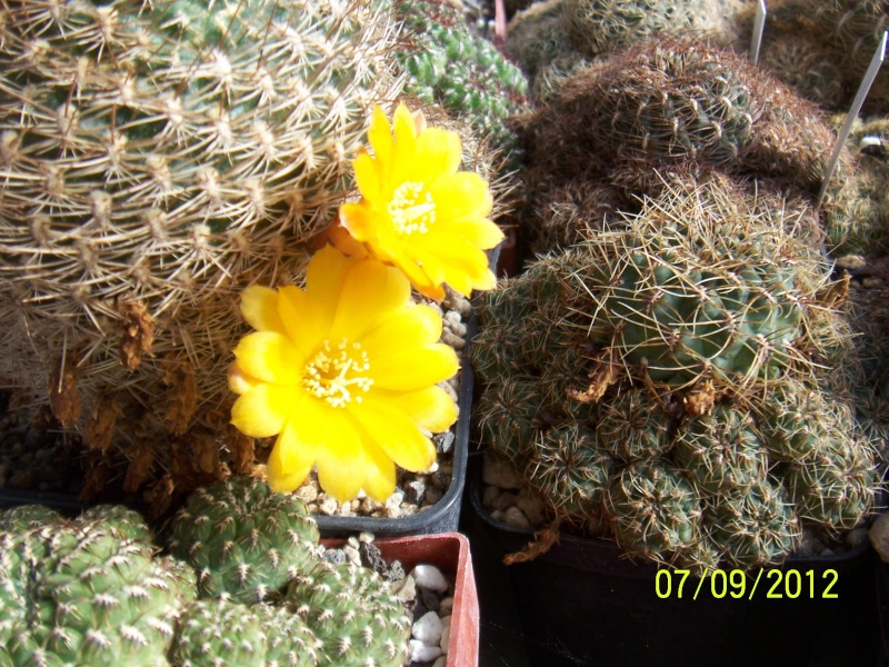 Cacti and Sukkulent in Köln, every day new flowers in the greenhouse Part 34 Bild_325