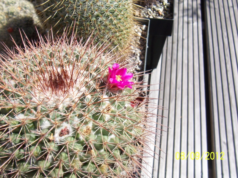 Cacti and Sukkulent in Köln, every day new flowers in the greenhouse Part 34 Bild_346