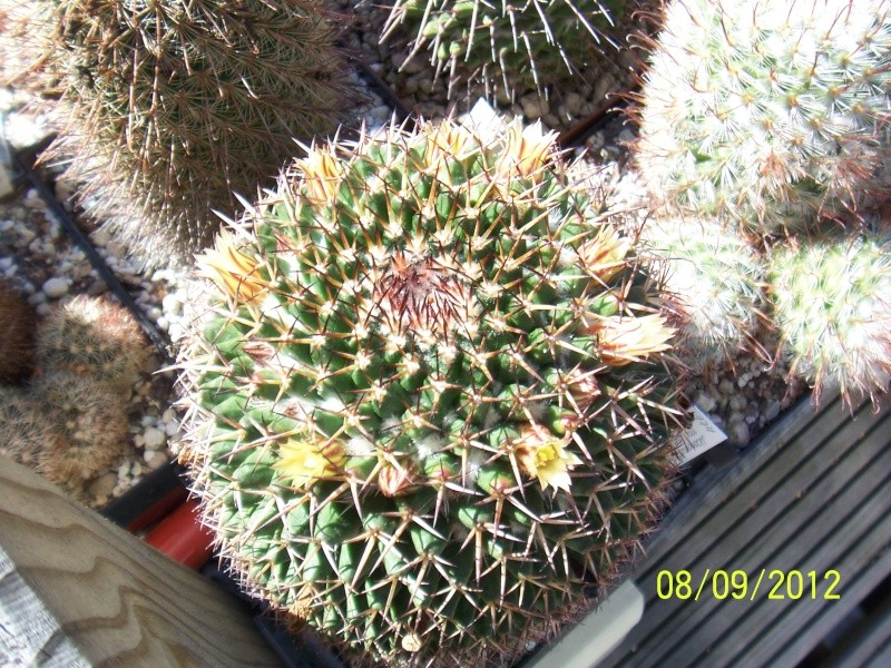 Cacti and Sukkulent in Köln, every day new flowers in the greenhouse Part 34 Bild_351