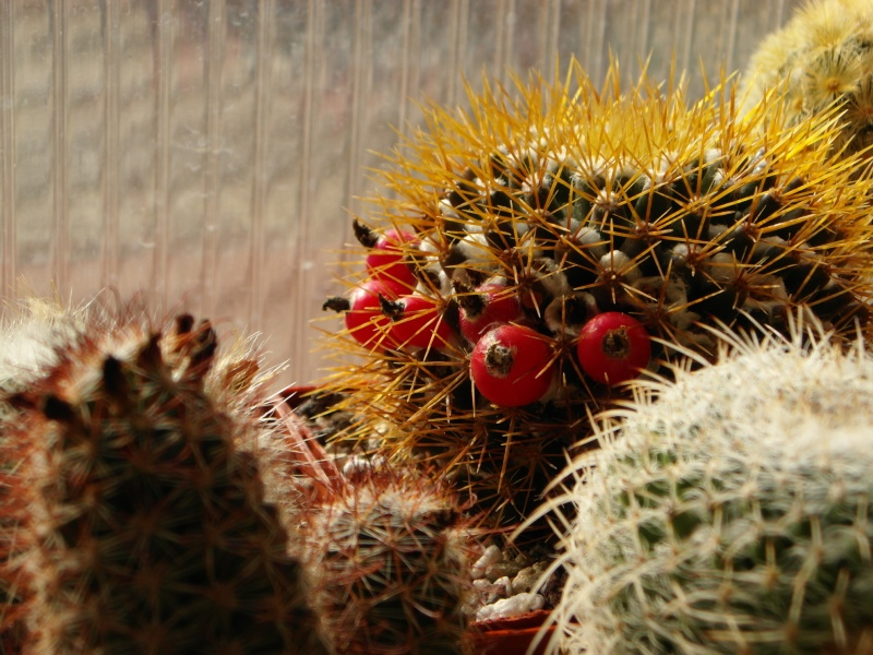 Cacti and Sukkulent in Köln, every day new flowers in the greenhouse Part 35 Bild_372
