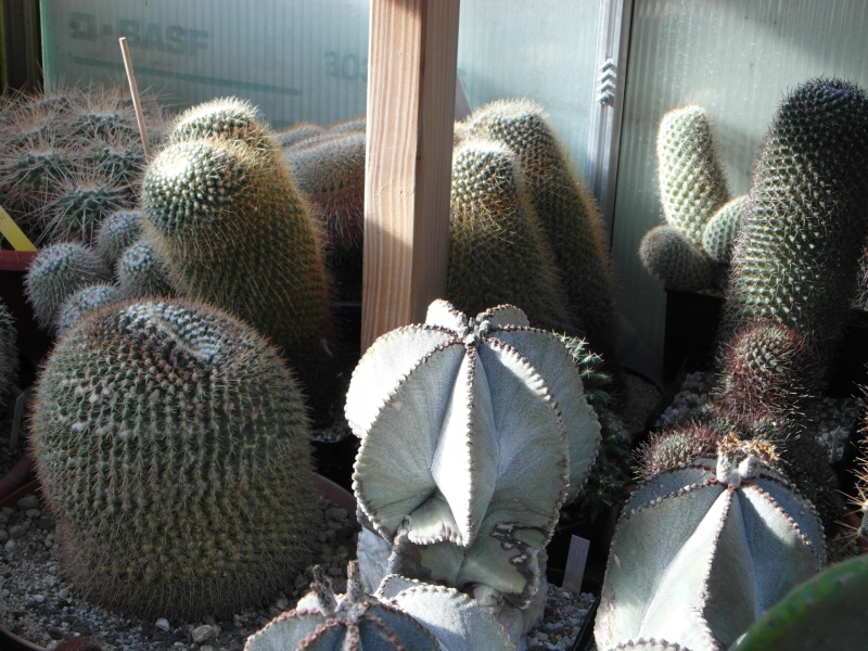 Cacti and Sukkulent in Köln, every day new flowers in the greenhouse Part 35 Bild_379
