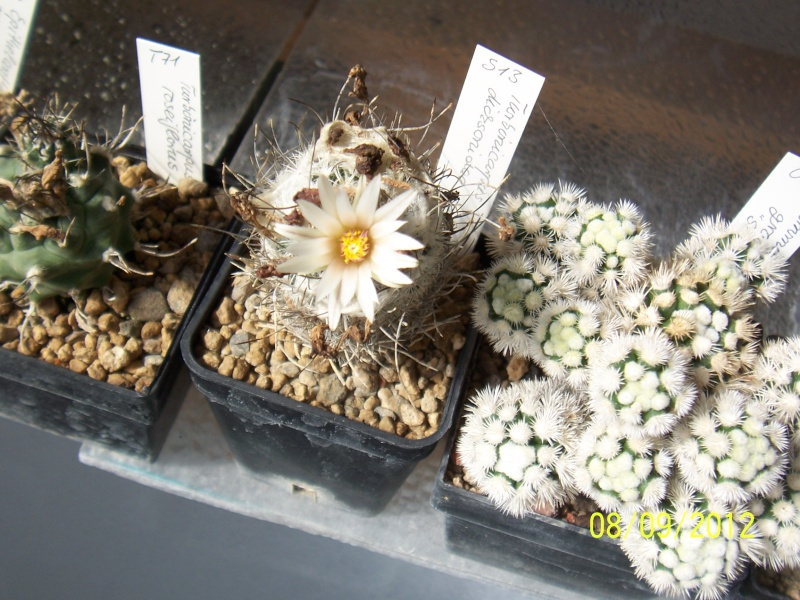 Cacti and Sukkulent in Köln, every day new flowers in the greenhouse Part 35 Bild_388