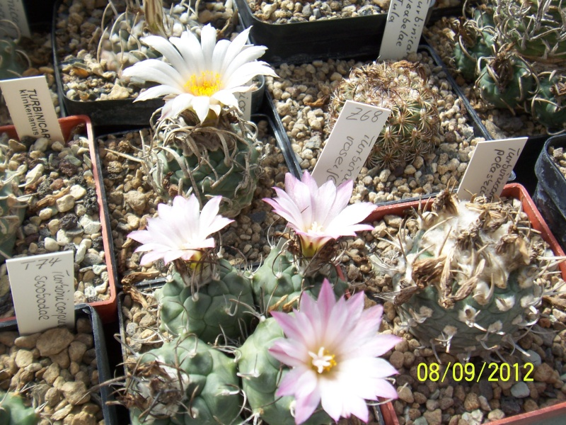Cacti and Sukkulent in Köln, every day new flowers in the greenhouse Part 35 Bild_389