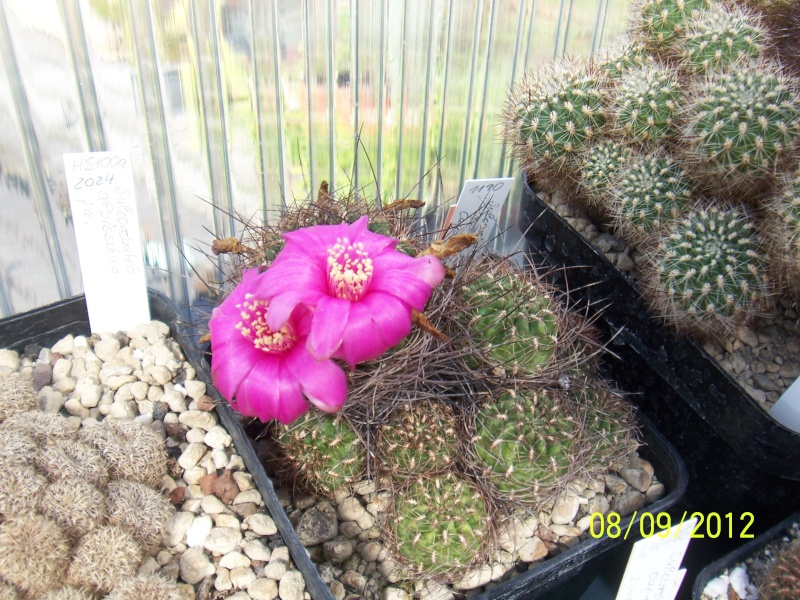 Cacti and Sukkulent in Köln, every day new flowers in the greenhouse Part 35 Bild_397