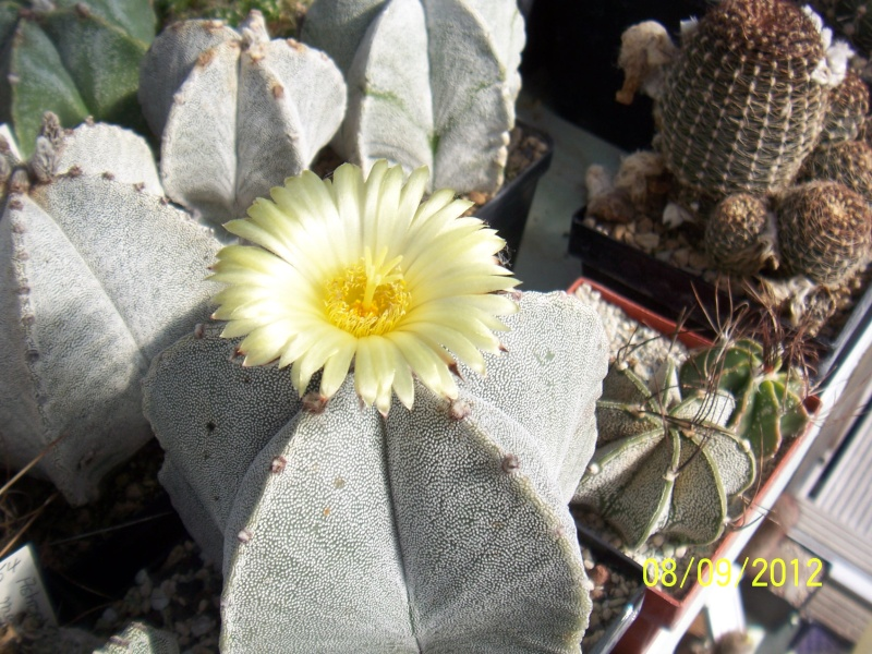 Cacti and Sukkulent in Köln, every day new flowers in the greenhouse Part 35 Bild_400
