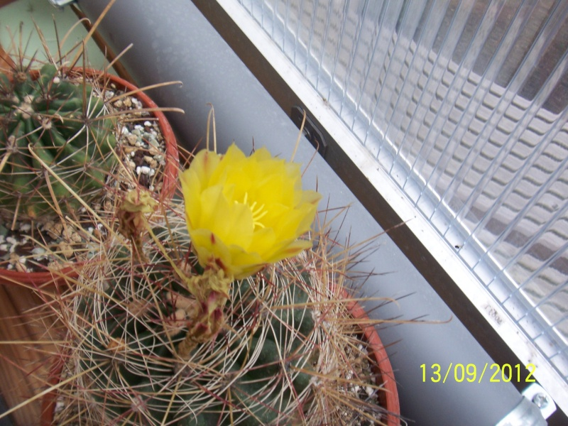 Cacti and Sukkulent in Köln, every day new flowers in the greenhouse Part 35 Bild_405