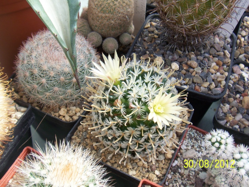 Cacti and Sukkulent in Köln, every day new flowers in the greenhouse Part 31 Bild_423