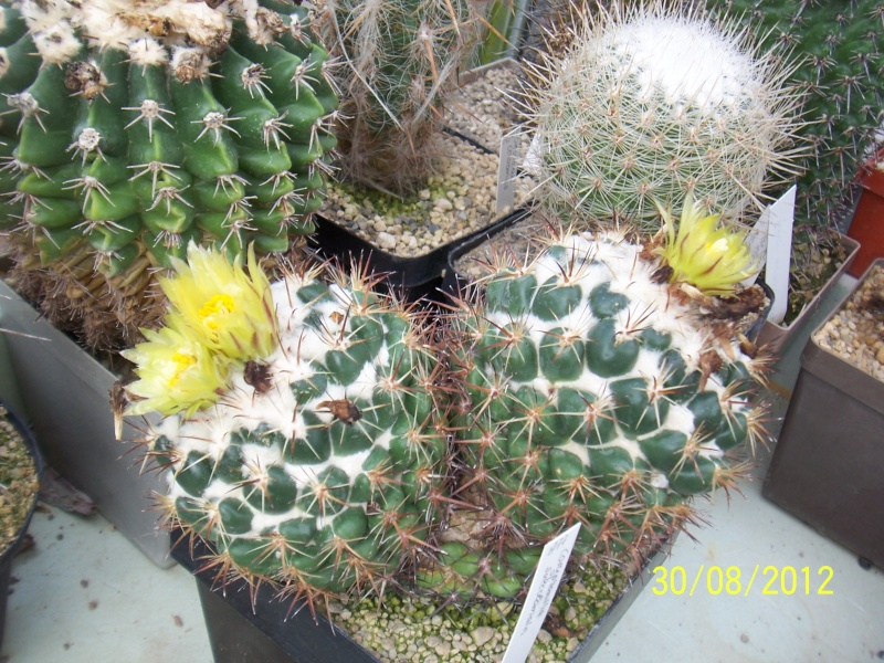 Cacti and Sukkulent in Köln, every day new flowers in the greenhouse Part 31 Bild_454