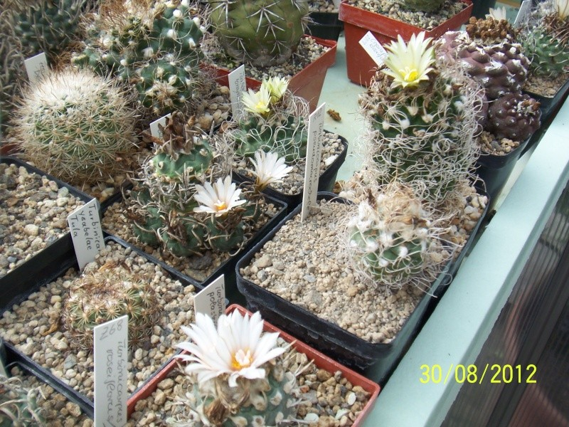 Cacti and Sukkulent in Köln, every day new flowers in the greenhouse Part 31 Bild_456
