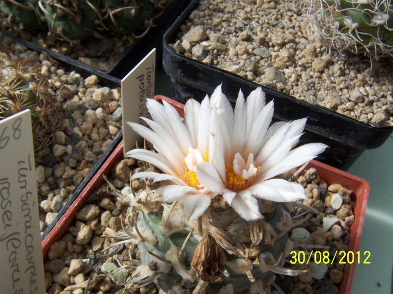 Cacti and Sukkulent in Köln, every day new flowers in the greenhouse Part 31 Bild_461