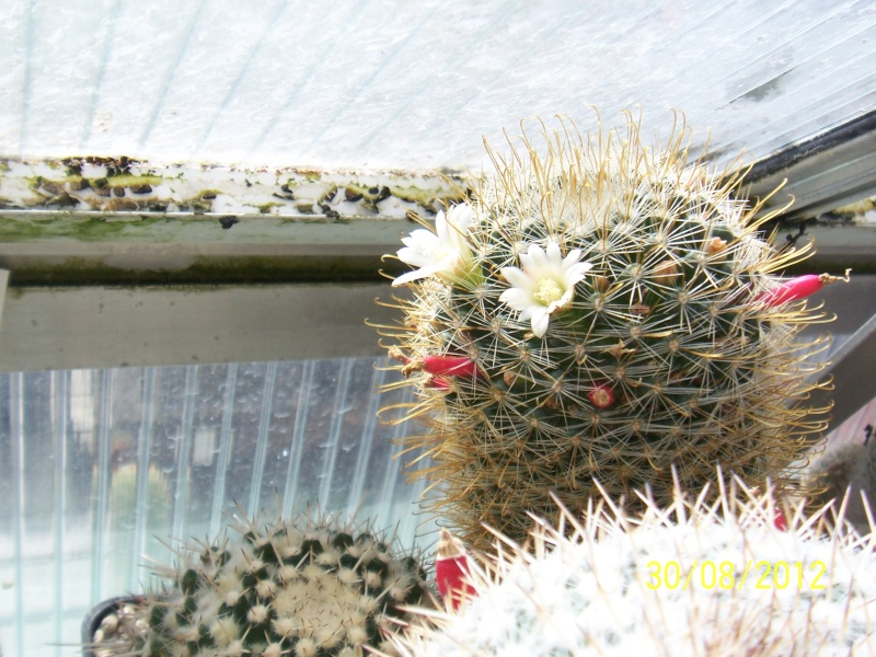 Cacti and Sukkulent in Köln, every day new flowers in the greenhouse Part 32 Bild_466