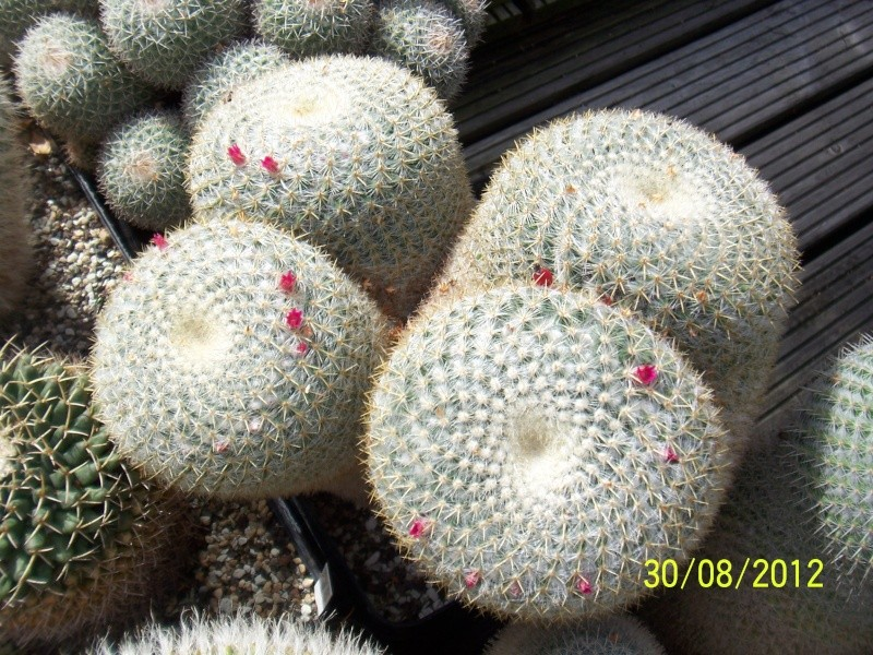 Cacti and Sukkulent in Köln, every day new flowers in the greenhouse Part 32 Bild_469