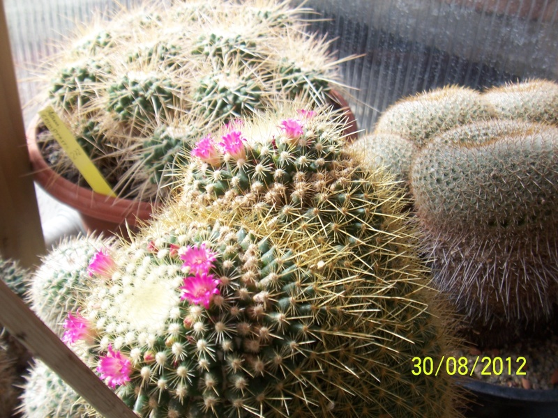 Cacti and Sukkulent in Köln, every day new flowers in the greenhouse Part 32 Bild_471
