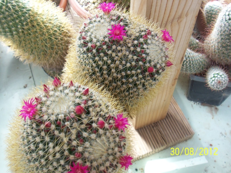 Cacti and Sukkulent in Köln, every day new flowers in the greenhouse Part 32 Bild_473