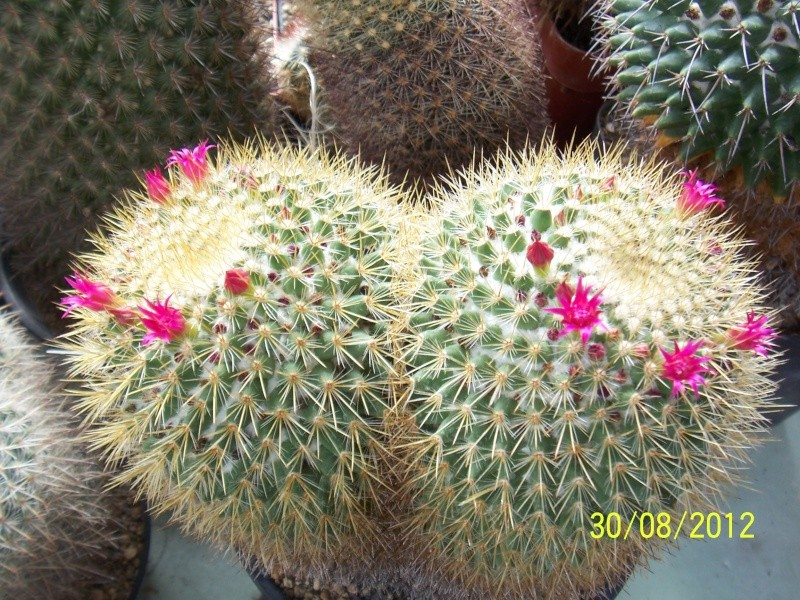 Cacti and Sukkulent in Köln, every day new flowers in the greenhouse Part 32 Bild_475