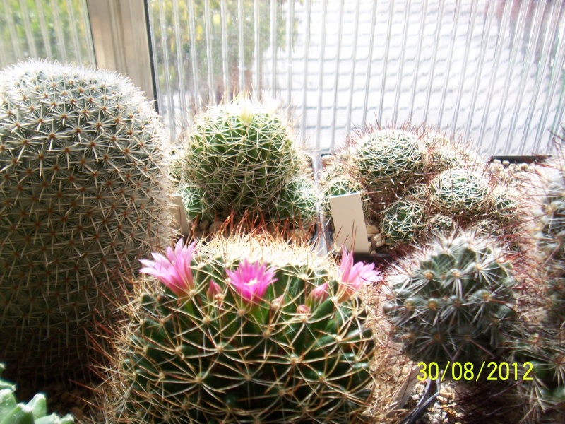 Cacti and Sukkulent in Köln, every day new flowers in the greenhouse Part 32 Bild_477