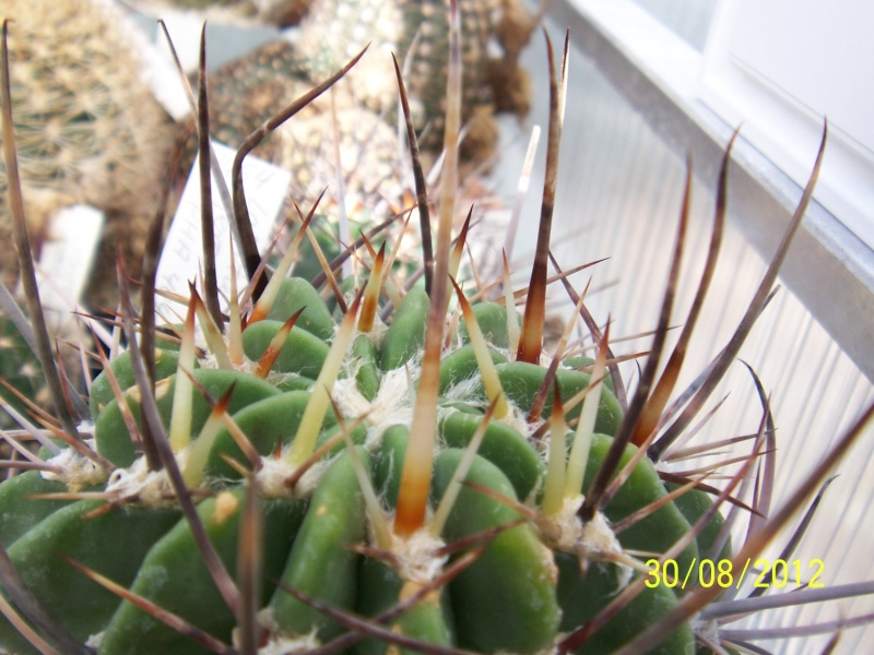 Cacti and Sukkulent in Köln, every day new flowers in the greenhouse Part 32 Bild_482