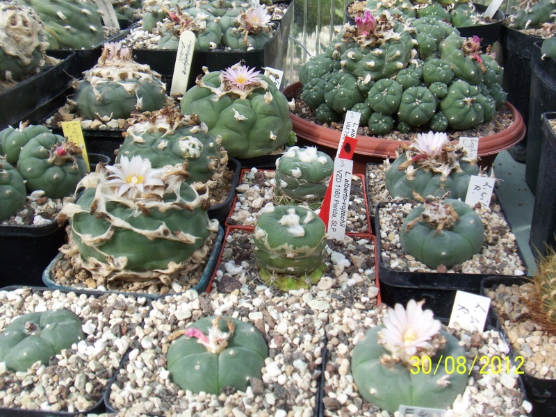 Cacti and Sukkulent in Köln, every day new flowers in the greenhouse Part 32 Bild_493