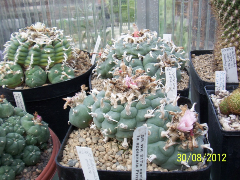 Cacti and Sukkulent in Köln, every day new flowers in the greenhouse Part 32 Bild_494