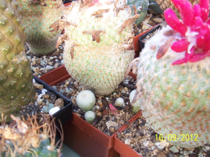 Cacti and Sukkulent in Köln, every day new flowers in the greenhouse Part 35 Bild_524