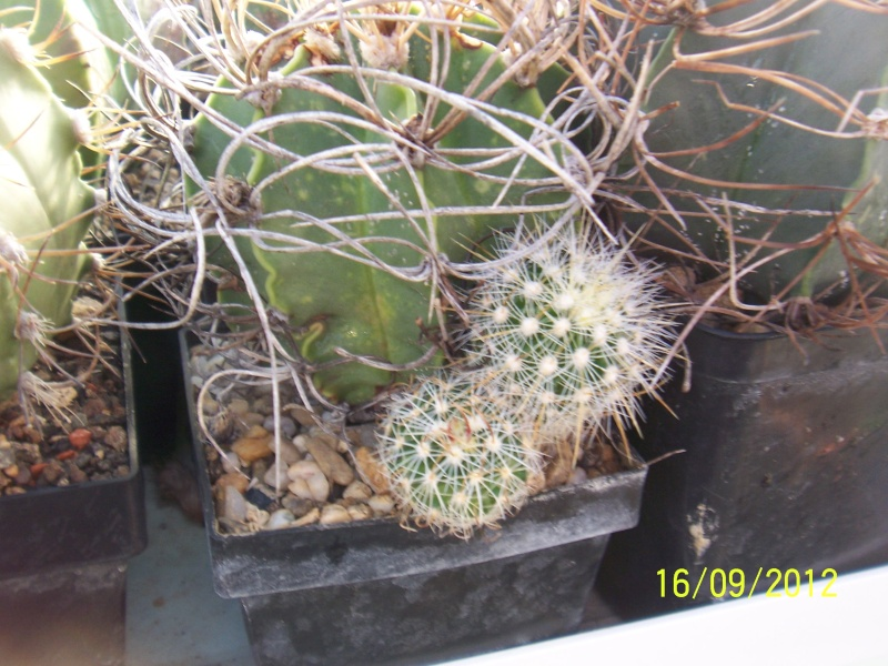 Cacti and Sukkulent in Köln, every day new flowers in the greenhouse Part 35 Bild_529