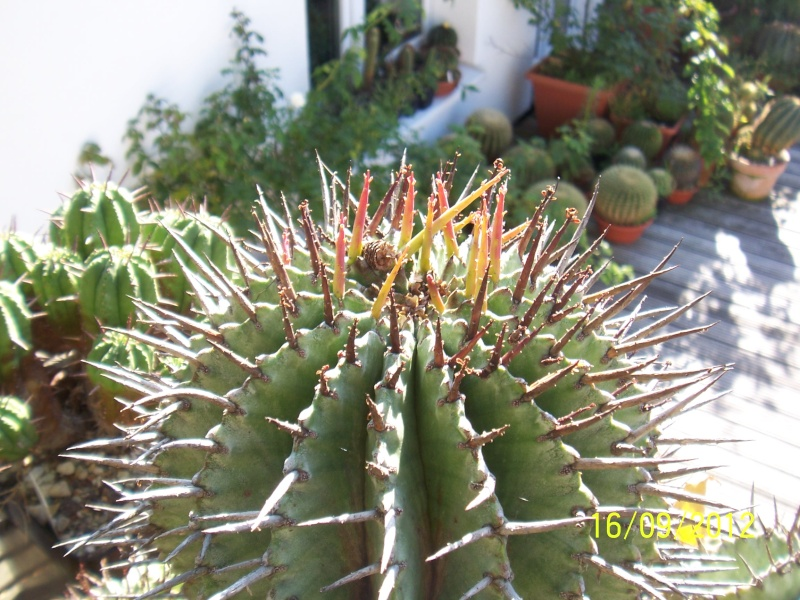 Cacti and Sukkulent in Köln, every day new flowers in the greenhouse Part 36 Bild_552