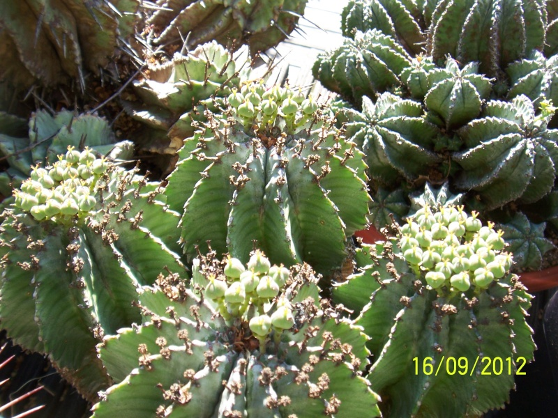 Cacti and Sukkulent in Köln, every day new flowers in the greenhouse Part 36 Bild_553