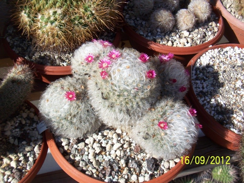 Cacti and Sukkulent in Köln, every day new flowers in the greenhouse Part 36 Bild_554