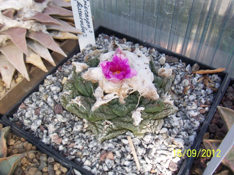 Cacti and Sukkulent in Köln, every day new flowers in the greenhouse Part 36 Bild_558