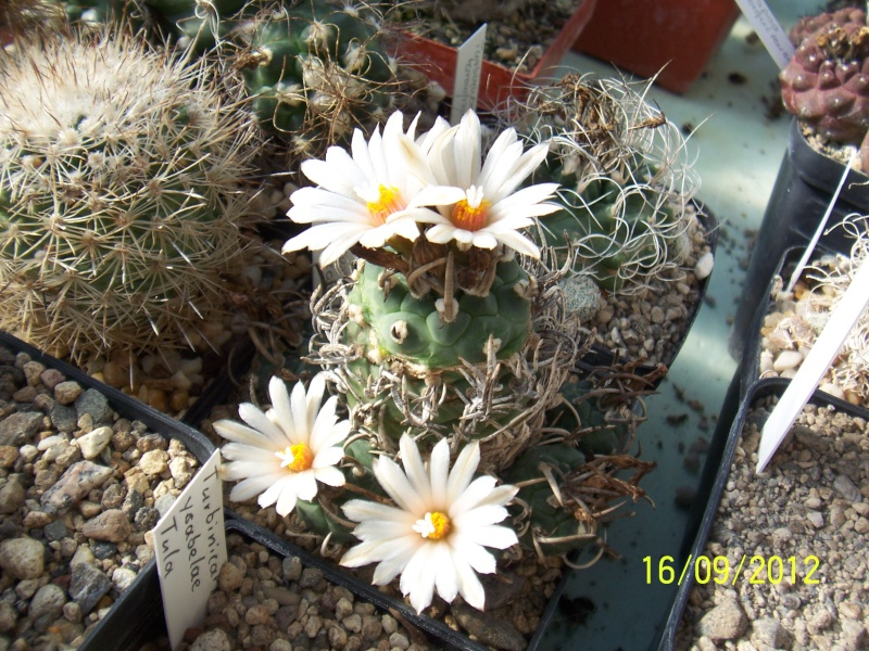 Cacti and Sukkulent in Köln, every day new flowers in the greenhouse Part 36 Bild_560