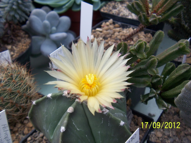 Cacti and Sukkulent in Köln, every day new flowers in the greenhouse Part 36 Bild_564