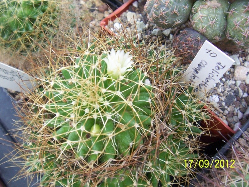 Cacti and Sukkulent in Köln, every day new flowers in the greenhouse Part 36 Bild_566