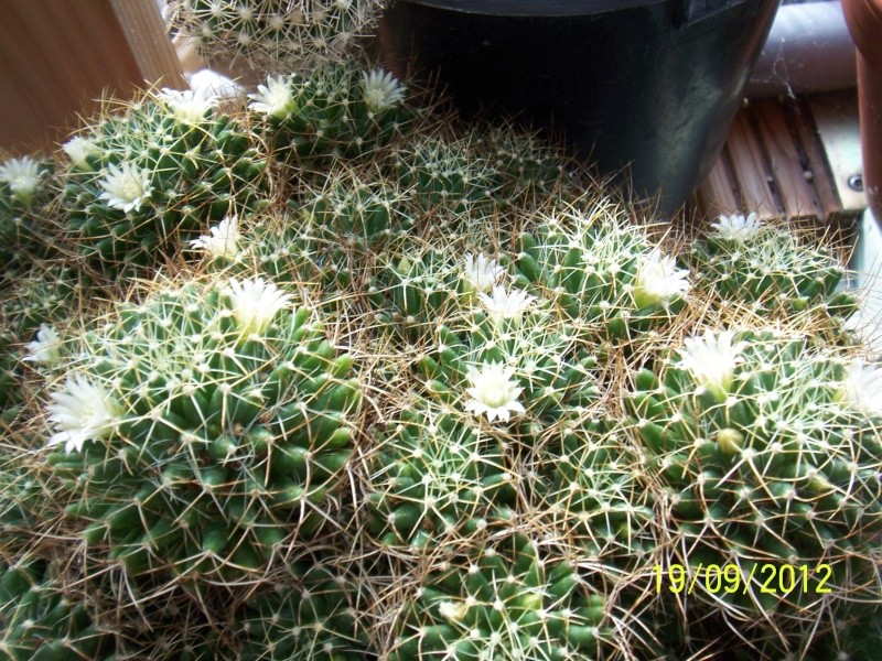 Cacti and Sukkulent in Köln, every day new flowers in the greenhouse Part 36 Bild_567