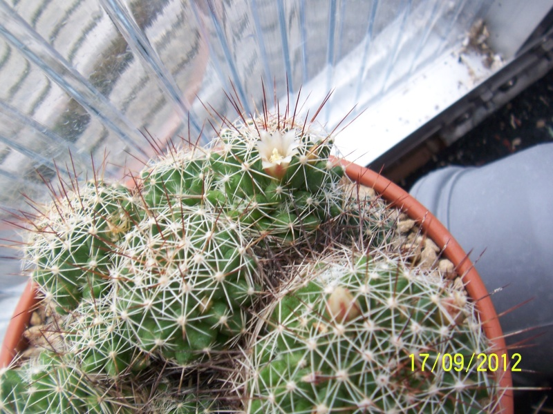 Cacti and Sukkulent in Köln, every day new flowers in the greenhouse Part 36 Bild_573