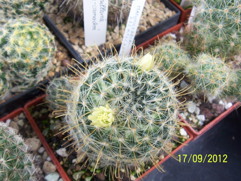Cacti and Sukkulent in Köln, every day new flowers in the greenhouse Part 36 Bild_574