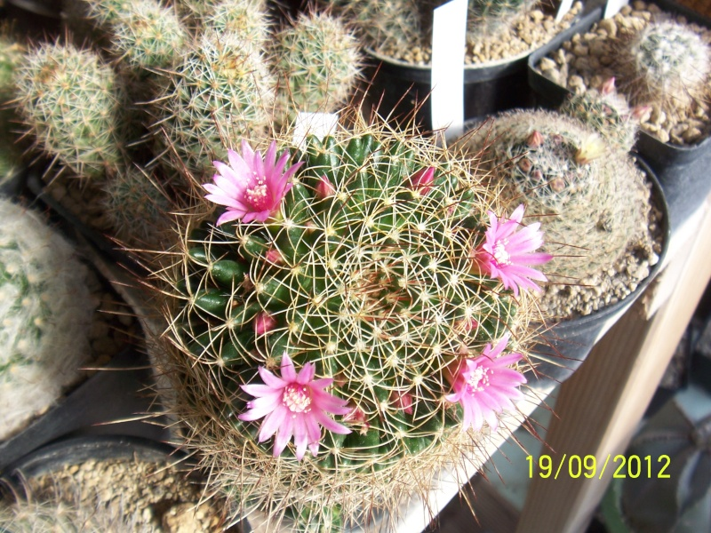 Cacti and Sukkulent in Köln, every day new flowers in the greenhouse Part 36 Bild_576