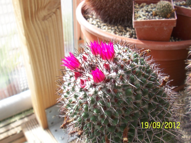 Cacti and Sukkulent in Köln, every day new flowers in the greenhouse Part 36 Bild_579