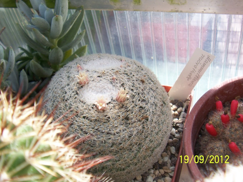 Cacti and Sukkulent in Köln, every day new flowers in the greenhouse Part 36 Bild_582