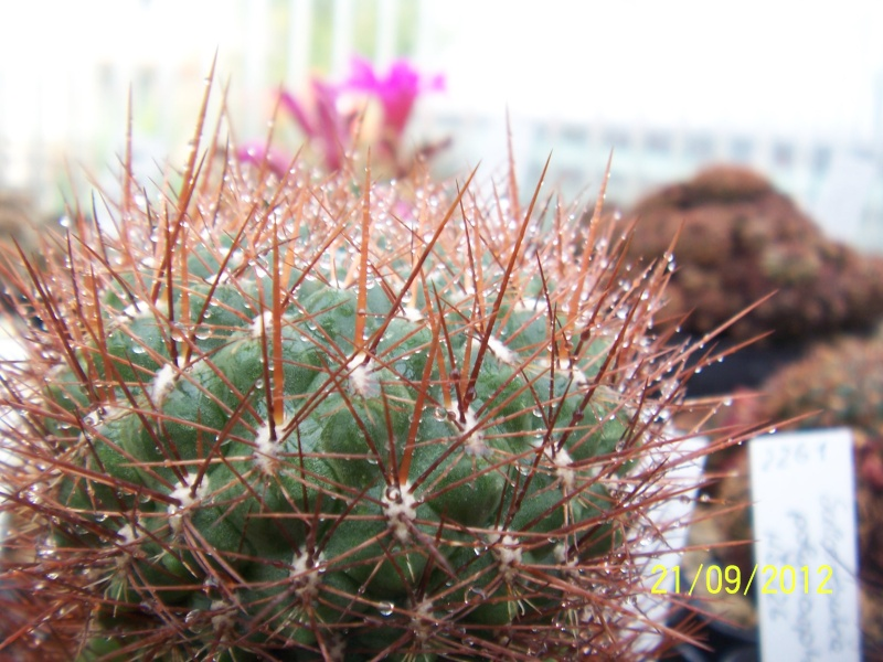 Cacti and Sukkulent in Köln, every day new flowers in the greenhouse Part 36 Bild_593