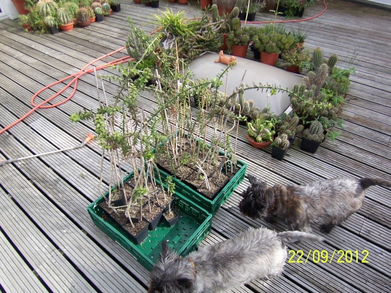 Cacti and Sukkulent in Köln, every day new flowers in the greenhouse Part 37 Bild_603