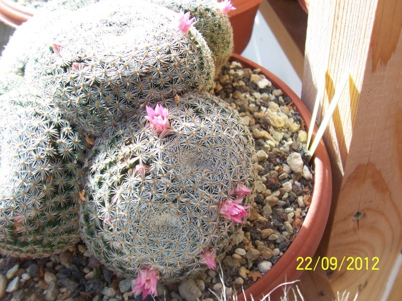 Cacti and Sukkulent in Köln, every day new flowers in the greenhouse Part 37 Bild_611
