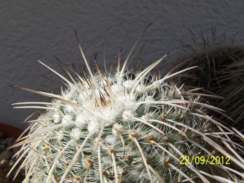 Cacti and Sukkulent in Köln, every day new flowers in the greenhouse Part 37 Bild_613