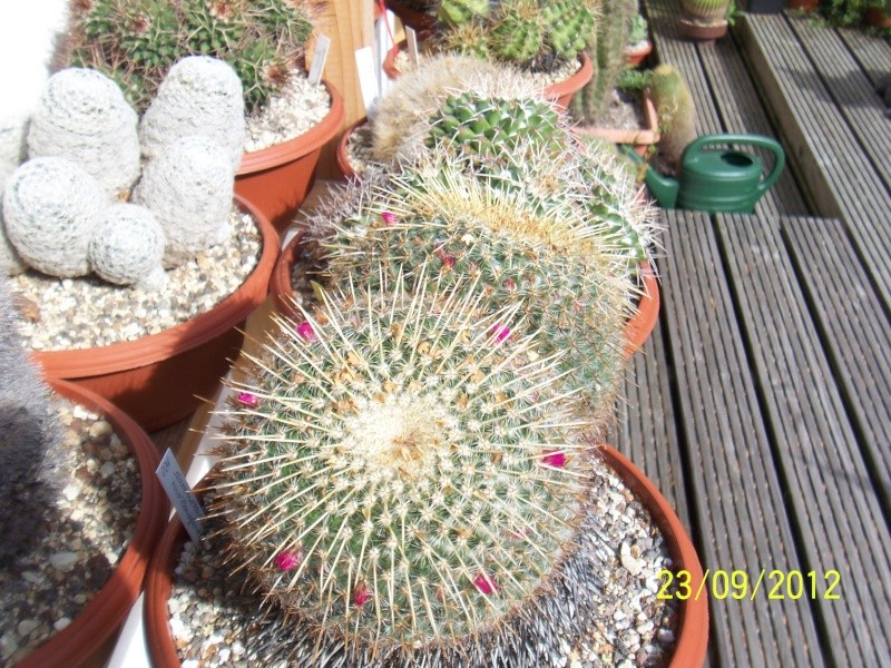 Cacti and Sukkulent in Köln, every day new flowers in the greenhouse Part 37 Bild_614