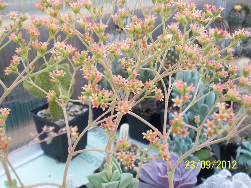 Cacti and Sukkulent in Köln, every day new flowers in the greenhouse Part 37 Bild_616