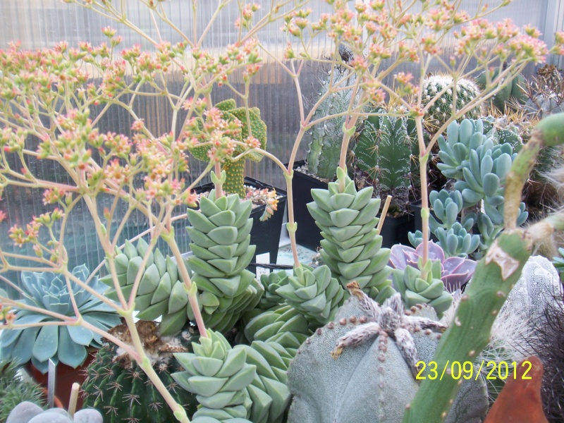 Cacti and Sukkulent in Köln, every day new flowers in the greenhouse Part 37 Bild_617