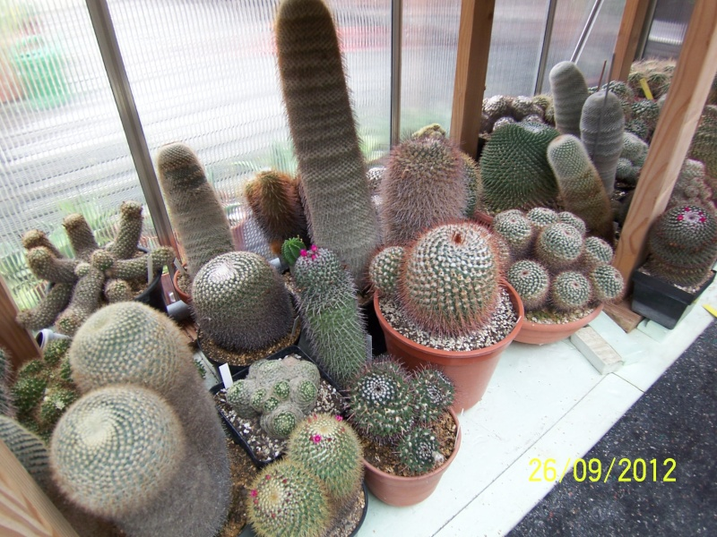 Cacti and Sukkulent in Köln, every day new flowers in the greenhouse Part 37 Bild_628