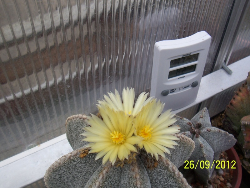 Cacti and Sukkulent in Köln, every day new flowers in the greenhouse Part 37 Bild_631