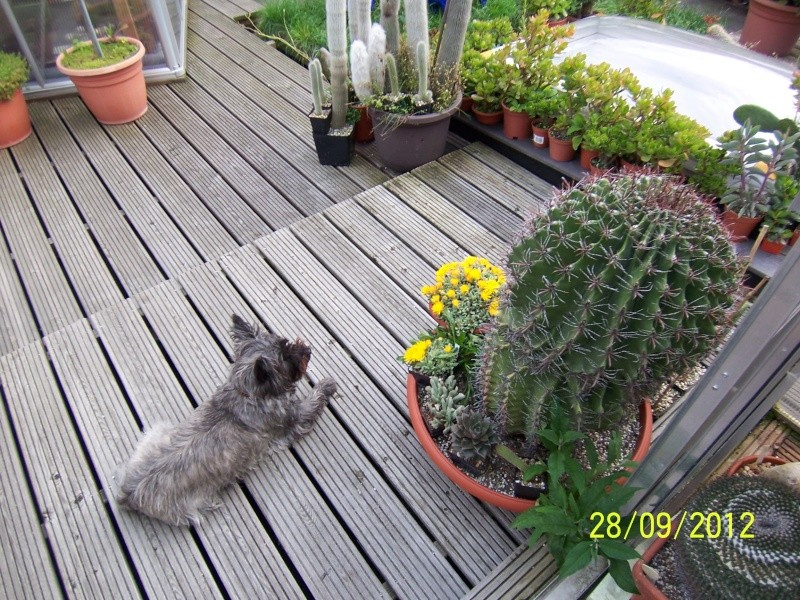 Cacti and Sukkulent in Köln, every day new flowers in the greenhouse Part 37 Bild_653